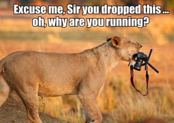 lion camera funny